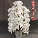 胡蝶蘭 3本立ち 白 大輪45輪(蕾込み)以上【送料無料 税込みで24800円!!】【楽天1位獲得】 花 お供え お祝い …