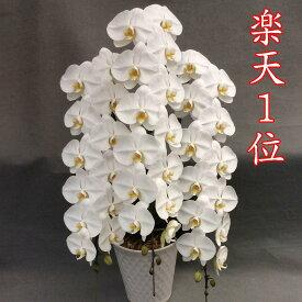 胡蝶蘭 3本立ち 白 大輪45輪(蕾込み)以上【送料無料 税込みで24800円!!】【楽天1位獲得】 花 お供え お祝い コチョウラン こちょうらん