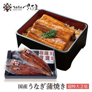 超特大うなぎ 蒲焼き 2尾セット 鰻 国産 ウナギ【冷凍便】