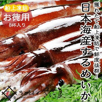 【冷凍便】海鮮 バーベキューセット 日本海するめいか 8杯