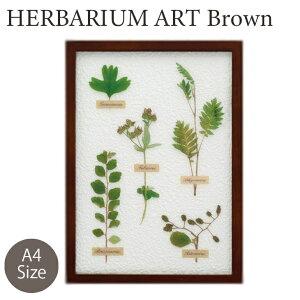 ハーバリウム アートフレーム センダングサ ナチュラル雑貨 おしゃれ ディスプレイ かわいい ギフト プレゼント 額縁 花 A4 インテリア KH-61090 キシマ