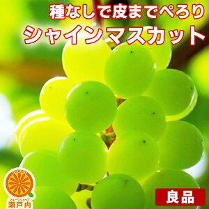 シャインマスカット 良品 約2kg〜2.4kg (目安2〜8房) ご家庭用【送料無料(一部地域除く)】フルーツ 葡萄 皮ごと食べれる 種なしぶどう 果物 くだもの 果実 青果 食品ロス ブドウ おやつ デザー