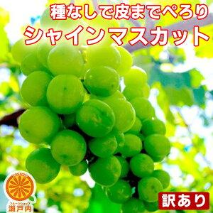 シャインマスカット 訳あり 約1kg〜1.2kg (目安1〜4房) ご家庭用【送料無料(一部地域除く)】フルーツ 葡萄 皮ごと食べれる 種なしぶどう 果物 くだもの 果実 青果 食品ロス ブドウ おやつ デザ