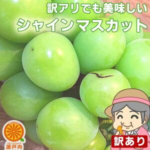 ご家庭用 農家さんもぐもぐ 訳ありシャインマスカット 約1kg〜1.2kg (目安1〜4房) 【送料無料(一部地域除く)】フルーツ 葡萄 皮ごと食べれる 種なしぶどう 果物 くだもの 果実 青果 食品ロス ブ