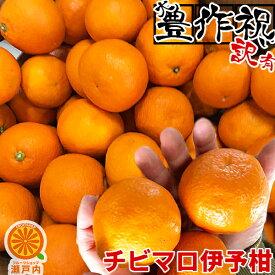 【買い回りに♪】愛媛産 チビマロいよかん 2kg 訳あり【2品で+2kg(6kgセット) 3品で+4kg(10kgセット)】【送料無料(一部地域除く)】不揃い 伊予柑 愛媛県産 フルーツ 果物 くだもの 果実 お試し 食品 みかん 蜜柑 柑橘類 かんきつ コロナ おうち時間応援 産地直送