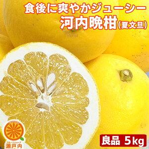 愛媛産 河内晩柑 良品 5kg【送料無料(一部地域除く)】 愛媛県産 夏文旦 和製グレープフルーツ かわうちばんかん 宇和ゴールド みしょうかん 美生柑 家庭用 旬の果物 くだもの みかん 柑橘類