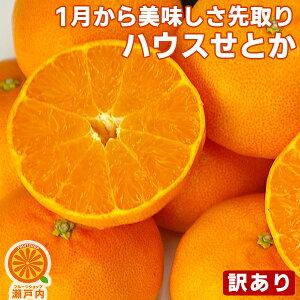 愛媛産 ハウスせとか 2kg 訳あり・不揃い【送料無料(一部地域除く)】愛媛県産 家庭用 フルーツ 果物 くだもの 果実 青果 食品 アウトレット みかん 箱買い 蜜柑 せとかみかん 柑橘類 かんきつ
