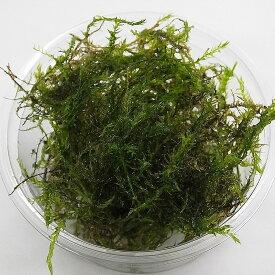 【送料無料】ウィローモス 無農薬 1カップ 約10g エビ シュリンプ メダカ 金魚藻 川魚