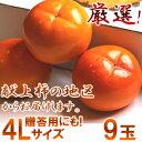 Oyama-4ll