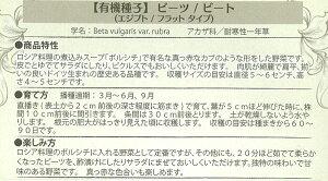 [野菜タネ]【有効期限18年05月】野菜の種:ビーツ/ビート(エジプト/フラットタイプ)