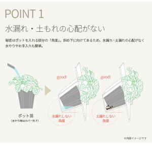 観葉植物/フォトフレームタイプ鉢カバーBFA(ホワイト)&ポトス・エンジョイ