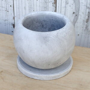 観葉植物/万年青(おもと):姫牡丹鉢植え/マルモボウル白・皿付き