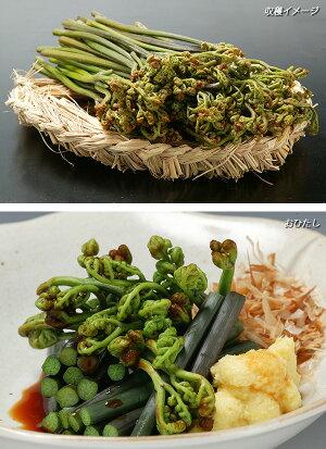野菜の苗/ワラビ3号ポット