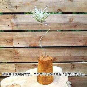 観葉植物/デコレーション資材:エアプランツ用スタンドM(高さ約28cm)