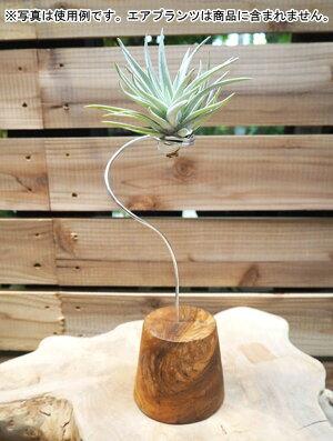 観葉植物/デコレーション資材:エアプランツ用スタンドS(高さ約24cm)