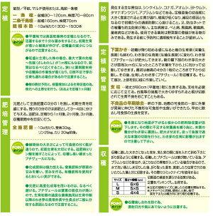 野菜の苗/プチヴェールホワイト3号ポット4株セット