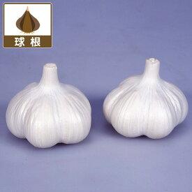 野菜の苗/野菜球根パック:ニンニク:ホワイト六片 2球入り