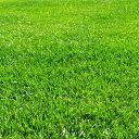芝の種:トールフェスク インフェルノ1kg