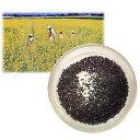 [タネ]景観作物:菜の花500g入り