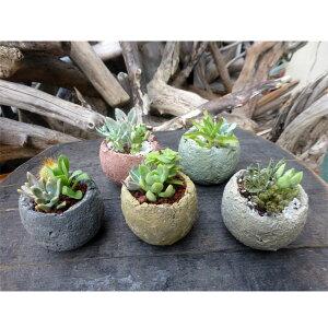 観葉植物/流木チップポットミニ5色セット(多肉植物3品種寄せ植えの流木フラワーポット)