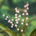 山野草の苗/ドイツすずらん:ピンク 3号ポット