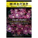 [花タネ]アクイレギア(西洋オダマキ)ウィンキーシリーズ:ローズローズ*