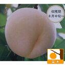 果樹の苗/モモ(桃):白秋(ハクシュウ)4〜5号ポット