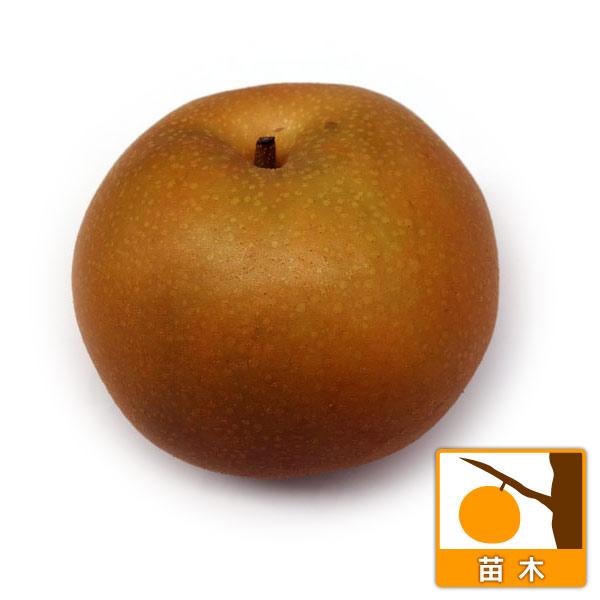 【ラッキーシール対応】果樹の苗/ナシ(梨):なんすい(南水)4号ポット