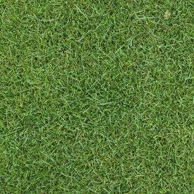 芝の種:ケンタッキーブルーグラスブルーノート1kg[暑さに強く日陰にも向く タネ 40平米分]
