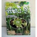 野菜の苗/野菜球根パック:秋田ふき1株