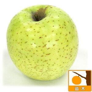 果樹の苗/リンゴ:オウリン(王林)4〜5号ポット