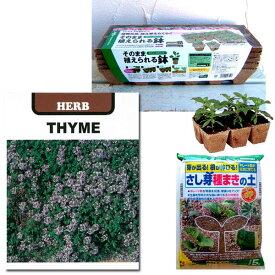 春秋まき種の苗つくりセット:クリーピングタイム