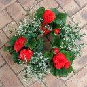 草花の苗/30cmリースプランター用6株セット:フォーチュンベゴニア赤系とダイヤモンドフロスト