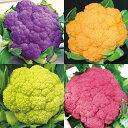 野菜の苗/カリフラワー:シチリアン4色セット