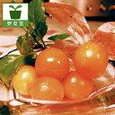 野菜の苗/食用ホオズキ:オレンジチェリー3号ポット2株セット