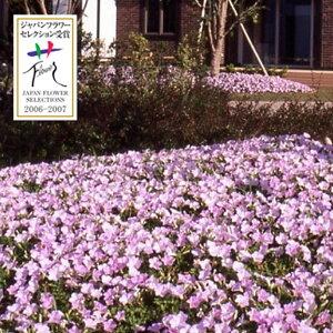 草花の苗/[送料無料]ランドスケープペチュニア:さくらさくら 20株セット