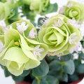 草花の苗/花オレガノ:ロタンディフォリウム3号ポット2株セット