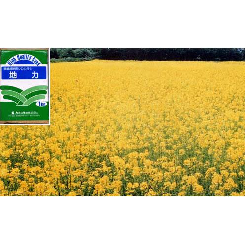 【ラッキーシール対応】景観緑肥用シロカラシ地力 1kg[タネ]