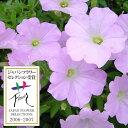 草花の苗/ランドスケープペチュニア:さくらさくら3.5号ポット6株セット