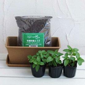 ハーブの苗/ハーブのミニプランター栽培セット:スペアミント