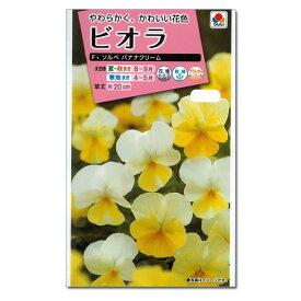 ビオラ:株姿がコンパクトで多花性 F1ソルベ バナナクリームの種 [タキイ 花タネ]*