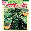 野菜の苗/プチヴェール3号ポット2株セット