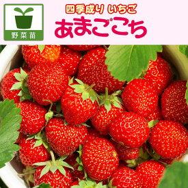 野菜の苗/イチゴ:四季なりいちご あまごこち3号ポット