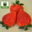 野菜の苗/イチゴ:とちおとめ3号ポット3株セット