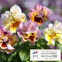 草花の苗/パンジー:エディブルムーランフリルアプリコットミックス3.5号ポット12株セット