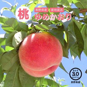 【送料無料】長野県産 ゆめかおり 桃 約3kg お取り寄せ 高級フルーツ スイーツ 旬の果物 産地直送 お買い得 秋の味覚 フルーツ お取り寄せ