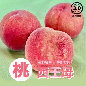 【送料無料】長野県産 西王母 桃 約3kg お取り寄せ 高級フルーツ スイーツ 旬の果物 産地直送 お買い得 秋の味覚 フルーツ お取り寄せ