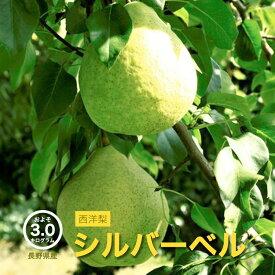 【送料無料】 長野県産 シルバーベル 西洋梨 約3kg 【産地直送 お買い得 冬の味覚 高級フルーツ 旬の果物 お取り寄せ 】