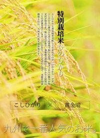 九州で一番人気のお米
