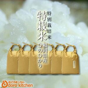 【元年産】福岡県産 たごもり農園の特別栽培米 ひのひかり 30kg(5kg×6) / お取り寄せグルメ 新鮮 玄米 白米 分つき米